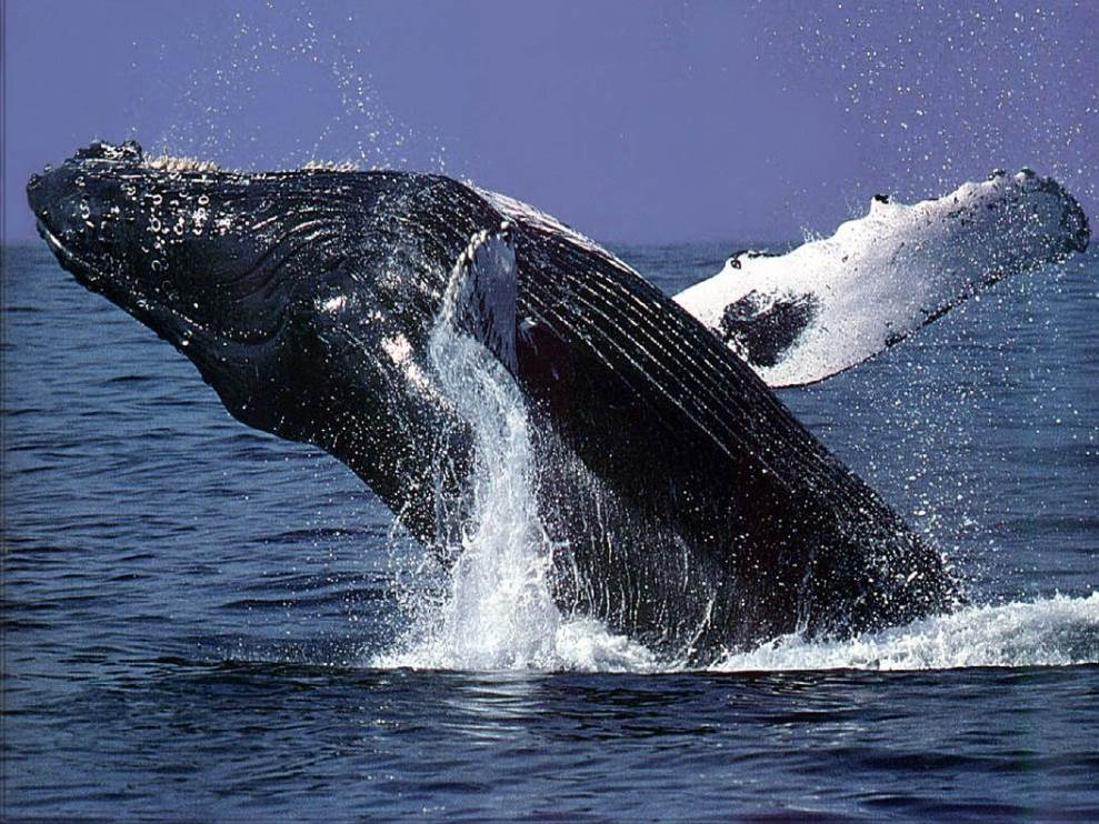 kauai-whale-watching-tours.jpg